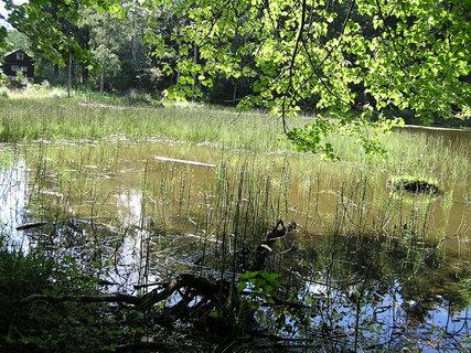 FOTKA - rybníček pod Křemešníkem