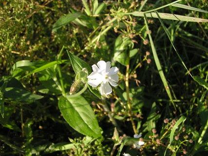 FOTKA - Bílá květinka
