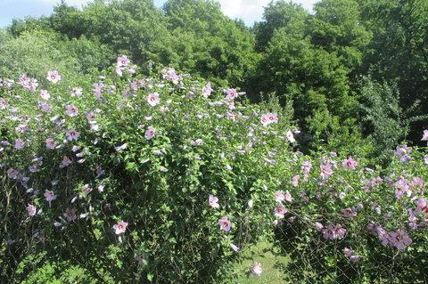 FOTKA - Zeleni i květům se u Labe daří