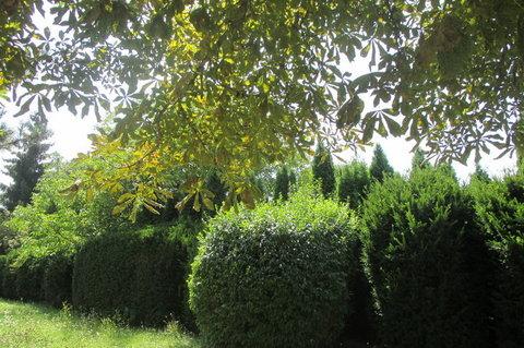 FOTKA - Srpnová zeleň