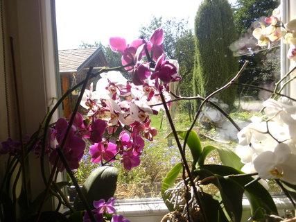 FOTKA - třetí třetina okna