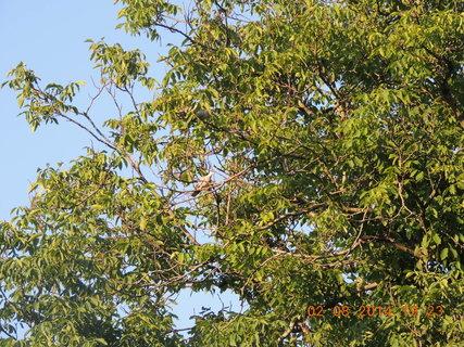 FOTKA - V korunách stromu je stále živo 2.8. 2014
