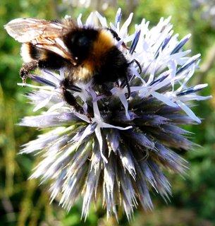 FOTKA - Bílá pylová zrnka