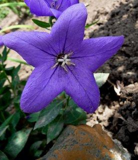 FOTKA - Detail modré hvězdy