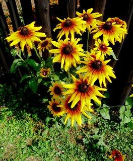 FOTKA - Květy a plot