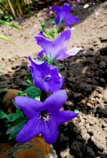 FOTKA - Modrá kaskáda