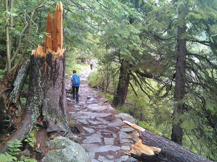 FOTKA - Vysoké Tatry - ulomený strom