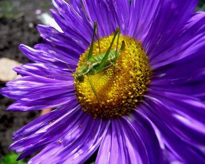 FOTKA - Koník v obětí s květinou