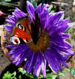 FOTKA - Motýl v květináči