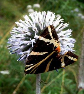 FOTKA - Elegantní hnědý háv
