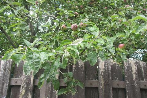 FOTKA - Kouzlo dřevěného plotu
