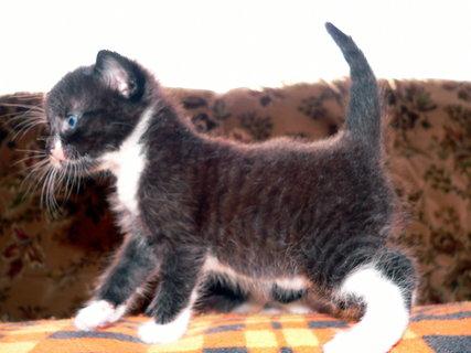 FOTKA - Kotě s Wifi anténkou