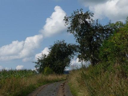 FOTKA - Milá cesta kukuřičným polem