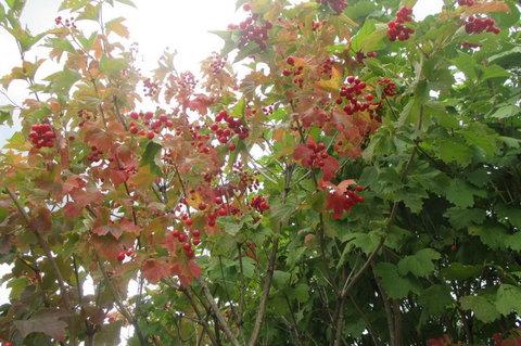 FOTKA - Dnes:   osvěžující  jasně  červené bobulky
