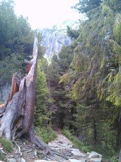 FOTKA - Vysoké Tatry - strom, ulomený
