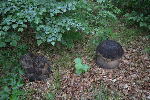 FOTKA - Sovy s houbou