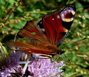 FOTKA - Nápoj ve fialovém poháru