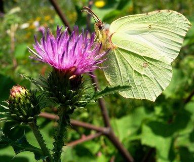 FOTKA - Poupě, květ a motýl