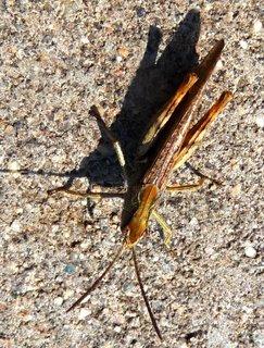 FOTKA - Stínová a živá kobylka