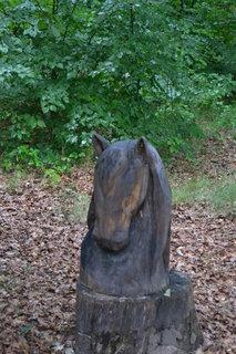 FOTKA - Hlava koně
