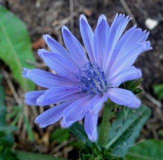 FOTKA - Modrá brána z modrých prašníků