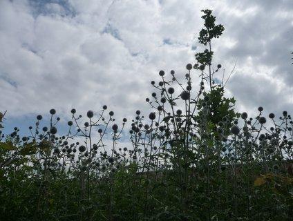 FOTKA - Obliny mraků nad oblinami bodláků končícího léta
