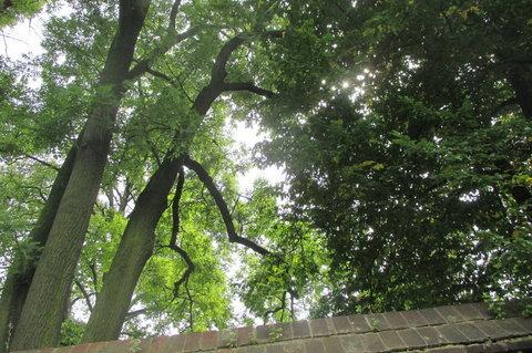 FOTKA - Mariánské hradby stromy přerostly