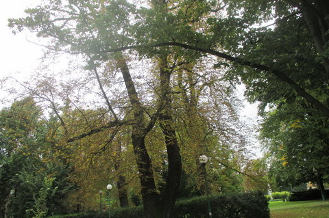 FOTKA - Královská zahrada -  podzim se blíží