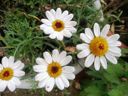 FOTKA - v květináči na zahradě