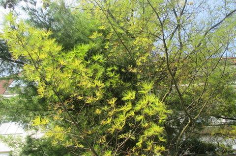 FOTKA - Podzimní  svěží zeleň