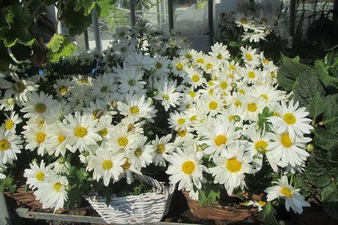 FOTKA - U květinářství
