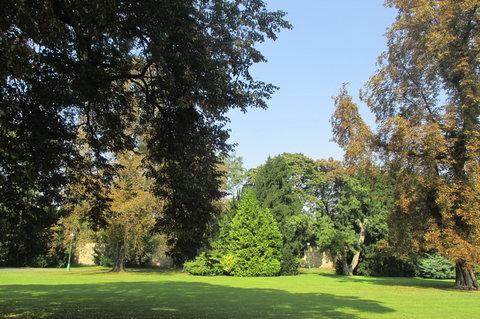 FOTKA - V Královské zahradě je spousta  stromů dovezených z ciziny