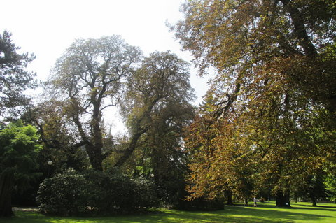 FOTKA - Skrz stromy - Katedrála sv. Víta