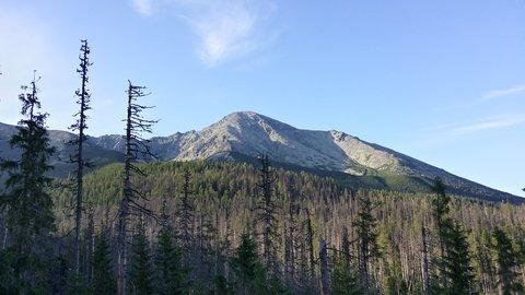 FOTKA - Vysoké Tatry - les a za ním hora
