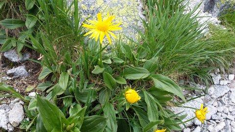 FOTKA - Vysoké Tatry - žlutá kvítka