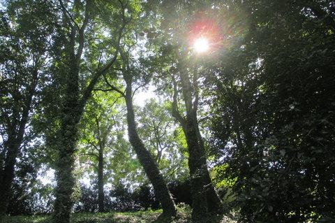 FOTKA - Zámecký park  Ctěnice -  stromy poskytují stín