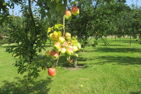 FOTKA - Z�meck� park  Ct�nice -  �roda jabl��ek