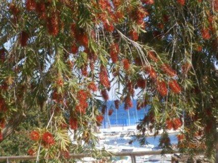 FOTKA -  pohled přes rozkvetlý strom
