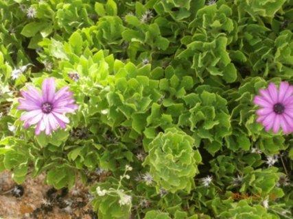 FOTKA - sukulenty kvetou