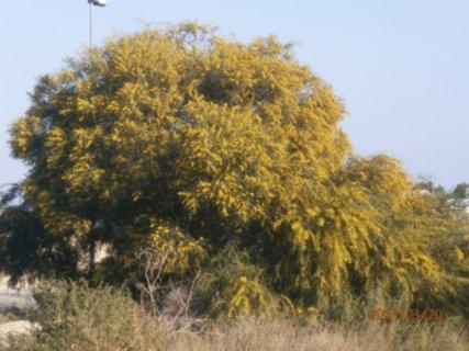 FOTKA -  březnu sluší žlutá barva