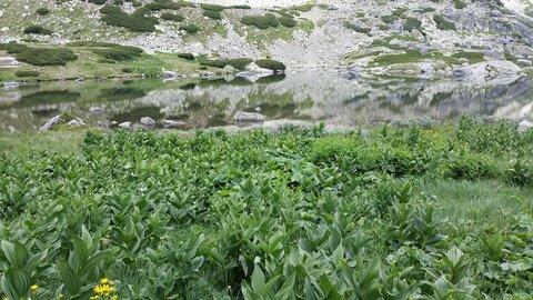FOTKA - Vysoké Tatry - porost u vody