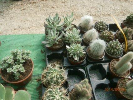 FOTKA -  přehlídka kaktusů
