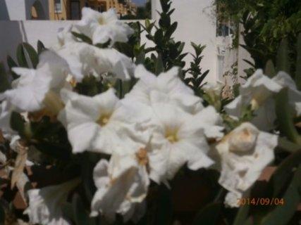 FOTKA -  bílá osvěží