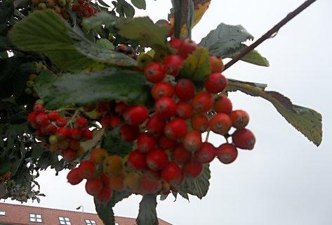 FOTKA - Ozdoba na stromě