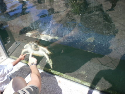 FOTKA - Mořská želva