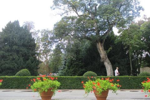 FOTKA - Vinobraní  v Královské zahradě