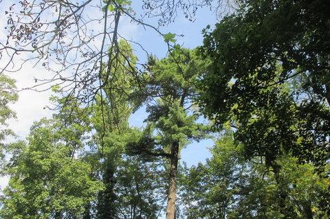 FOTKA - Ctěnický zámecký areál  - v korunách stromů