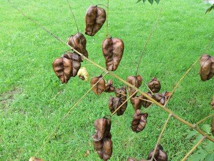FOTKA - větvička se semenáči