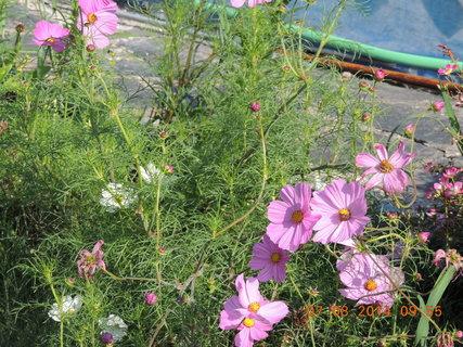 FOTKA - Krásenka ještě v plné kráse 7.8. 2014