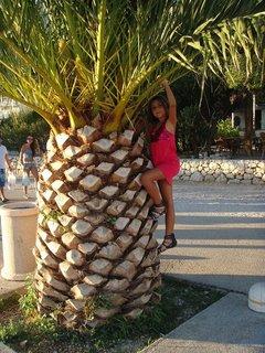 FOTKA - silná palma